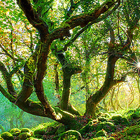 Magical panoramic golden Autumn Forest Ring of Kerry, County Kerry, Ireland / ba008
