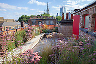 Sunny roof terrace, timber bench, decking, sedums, natural prairie planting
