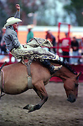 Bareback rodeo action