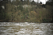 Maidenhead, United Kingdom.  General View, Wild Water from the water over the Weir. Raymill Island banks of the River Thames. <br /> <br /> Friday  03/02/2017 <br /> <br /> © Peter SPURRIER,<br /> <br /> Leica Camera AG  LEICA M (Typ 262)  1/250 sec.  mm 2.4 100 ISO.  28.6MB