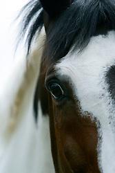 Sjonnie<br /> Beckum 2004<br /> Photo © Hippo Foto
