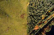 An aerial view of a two different land uses in the Scottish Borders, sheep farming and commercial forestry.