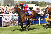 TAKE COVER (7) at 11years of age the gelding ridden by David Allan and trained by David Griffiths winning The Listed William Hill Beverley Bullet Sprint Stakes over 5f (£60,000) for the second time during the Beverley Bullet Day at Beverley Racecourse, Beverley, United Kingdom on 1 September 2018. Picture by Mick Atkins.