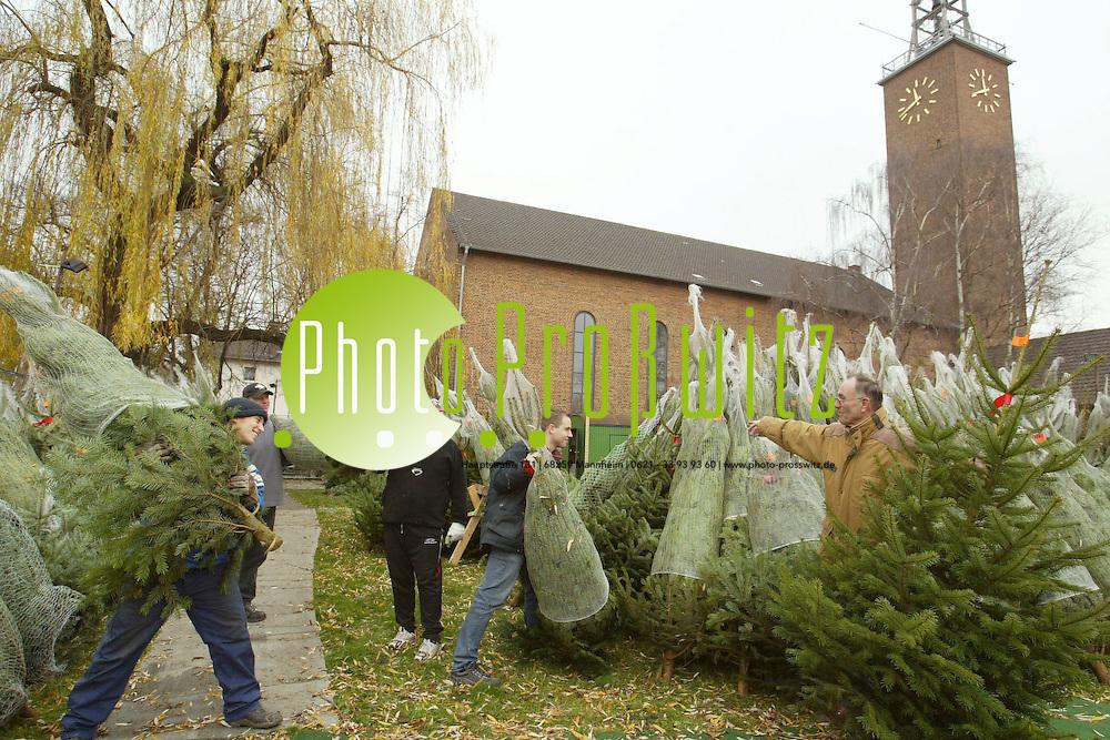 Mannheim.  Markuskirche Lindenhof. Christbaumverkauf<br /><br />Bild: Pro&szlig;witz