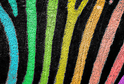 Digitally enhanced image of a close up of multi colored painted zebras