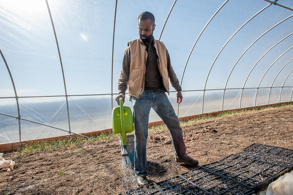 Farmer watering seed flats in a green house for germination