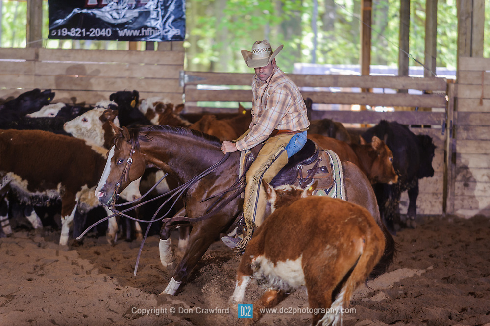 May 20, 2017 - Minshall Farm Cutting 3, held at Minshall Farms, Hillsburgh Ontario. The event was put on by the Ontario Cutting Horse Association. Riding in the Non-Pro Class is Eric Van Boekel on Mister Boss Hog owned by the rider.
