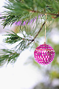 Pink mirrored Christmas ornament and pink garland hang from the boughs of an Austrian pine tree (pinus nigra) with snow and copy space for a greeting card or other text. Vertical.