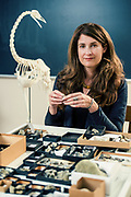Dr. Julia A. Clarke Professor, Wilson Centennial Fellow in Vertebrate Paleontology, Department of Geological Sciences, The University of Texas at Austin, April 2017