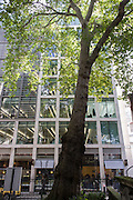 "On the site of a former churchyard, an ancient protected London Plane tree rises over 70 feet high on the corner of Wood Street and Cheapside in the City of London. Mentioned and fated in the annals of London history for almost 600 years, the tree is a city emblem, written about and quoted in text and verse including William Wordsworth in 1797: ""At the corner of Wood Street, when daylight appears / Hangs a Thrush that sings loud, it has sung for three years / Poor Susan has pass'd by the spot, and has heard / In the silence of morning the song of the bird .. A mountain ascending, a vision of trees / Bright volumes of vapour through Lothbury glide / And a river flows on through the vale of Cheapside."""
