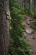 Trail marker, Marriott Basin trail Coast Mountains British Columbia