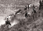 Wranglers from the Sombrero Ranch in Craig, Colorado, move their herd of saddle horses from winter pastures.
