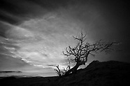 Tree in Black and White