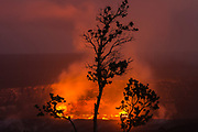 A silhouette of an Ohia Lehua tree in front of the volcanic eruption in Halemaumau Crater, Kilauea Volcano, Hawaii Volcanoes National Park, Big Island, Hawaii
