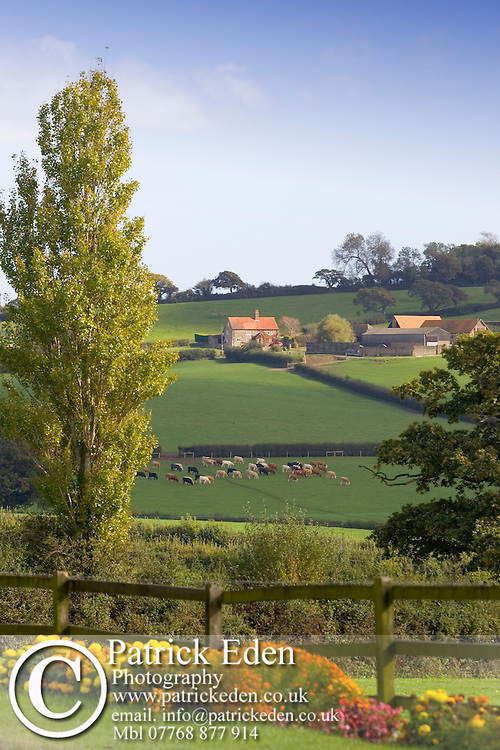 Kemphill Farm, Farm House Land Cattle Haven Street Isle of Wight UK Photographs of the Isle of Wight by photographer Patrick Eden photography photograph canvas canvases