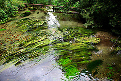 UK ENGLAND HAMPSHIRE ST MARY BOURNE 12AUG06 - General view of the river Test in Hampshire...jre/Photo by Jiri Rezac..© Jiri Rezac 2006..Contact: +44 (0) 7050 110 417.Mobile:  +44 (0) 7801 337 683.Office:  +44 (0) 20 8968 9635..Email:   jiri@jirirezac.com.Web:    www.jirirezac.com..© All images Jiri Rezac 2006 - All rights reserved.