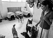 Sara Moran is the founder and operater of the Milagros Perrunos shelter for disabled dogs in Lima, Peru.
