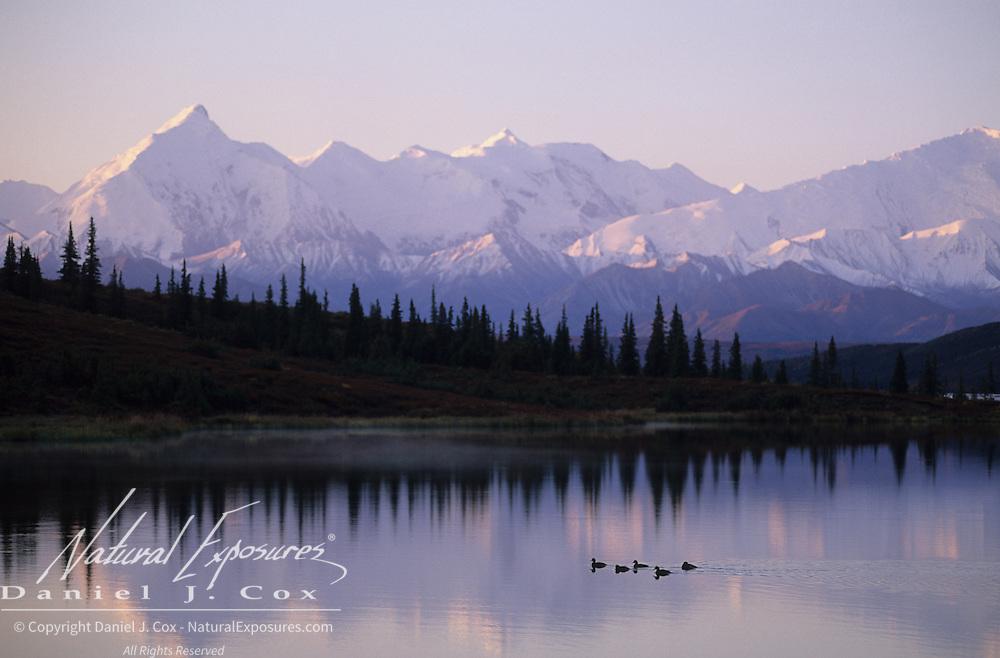 Snow-covered Alaskan mountain range and ducks on Wonder Lake in Denali National Park.