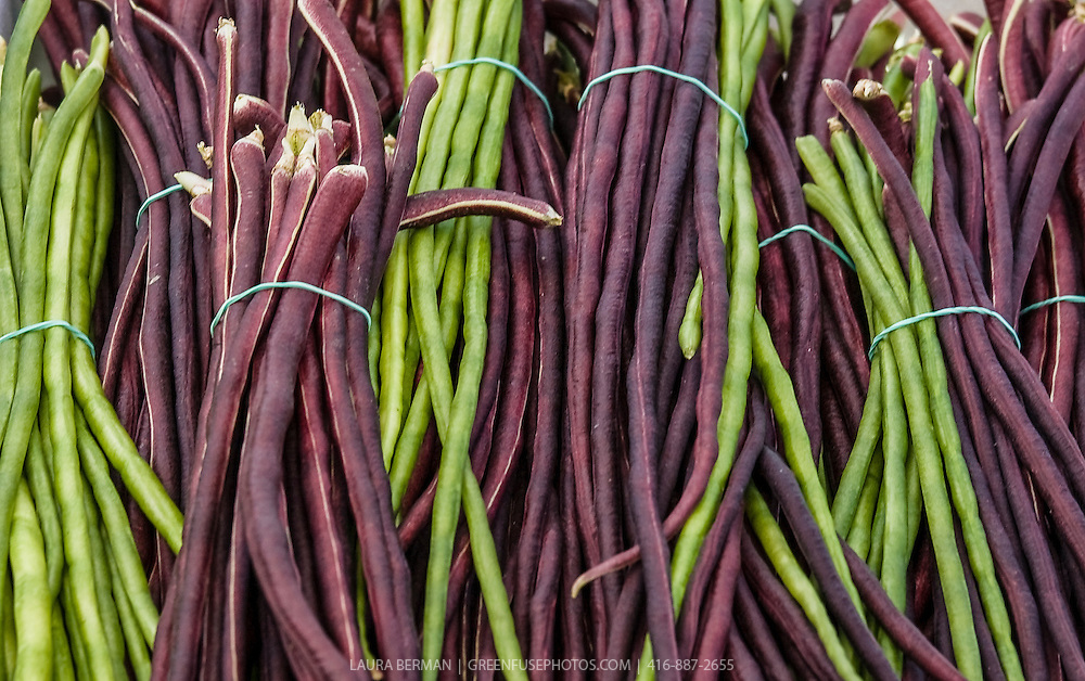 Bunches of green and purple Yardlong Beans at a farmers market.  Also called Asparagus Bean, Snake bean or Chinese Long Bean (Vigna unguiculata subsp. sesquipedalis)