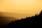 Forest landscape at dawn or dusk.