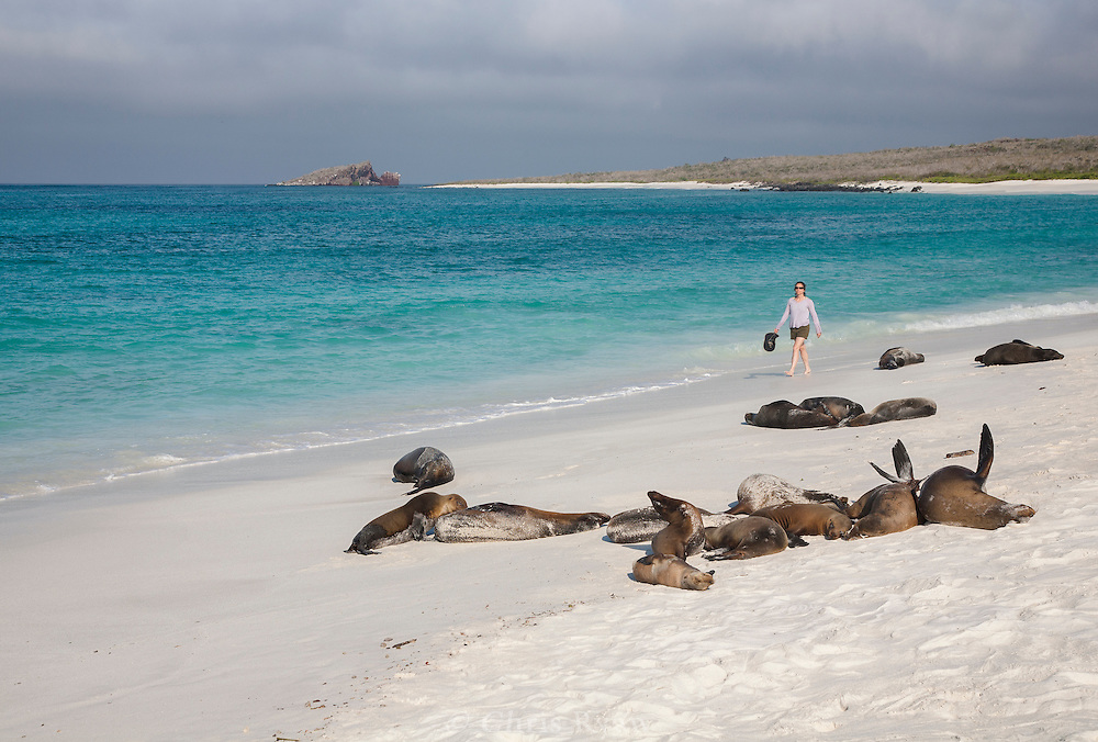 Visitor walking among sea lions on Espanola Island beach, Galapagos