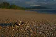 This Ghost Crab catches the early morning sun before retreating into its burrow.