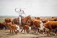 20130518_vower_ranch_branding