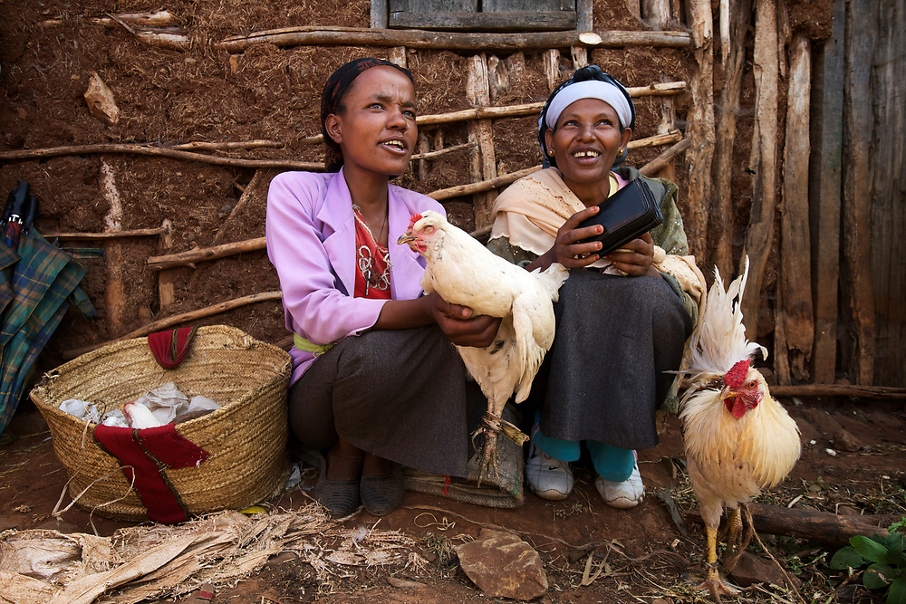 Market day in Goro, Ethiopia where women bring grain to sell and farmers bring cattle and other livestock. The cattle market is very busy with sellers and buyers mingling side by side with the animals. <br /> <br /> The grain may be ground into flower or may be used as seed for the next season's crop. They pour the grain to show it off and to further winnow and clean it to make it more valuable. Some were selling corn and chickpeas, but many were selling the typically Ethiopian grain called teff. <br /> <br /> Some choose to sell their grain directly to a broker or middleman rather that sit all afternoon in the hot sun. They can be seen with their bags of grain on a scale, waiting anxiously to see what price they will get for it. <br /> <br /> <br /> Contact: Woudyalew Mulatu<br /> ILRI Ethiopia<br /> w.mulatu@cgiar.org<br /> Mobile: +251 911 40 91 89<br /> PO Box 5689<br /> Addis Ababa, Ethiopia<br />   <br /> Contact: Shirley Tarawali<br /> Theme Director - People, Livestock, and the Evironment<br /> ILRI Ethiopia<br /> s.tarawali@cgiar.org<br /> Tel: +251 11 617 2221<br /> Tel: +251 91 164 5738<br /> PO Box 5689<br /> Addis Ababa, Ethiopia