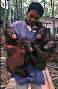 Balikpapan Orangutan Society, a refuge for orphaned orangutans, more and more are turning up due to the fires. Clinging onto man shows their dependence.<br />