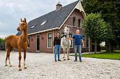 Stal Angenent - Girl Power Horses