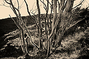 &quot;Landscape Figures&quot; explores the relationship between organic human figures and a notional 'wild landscape'. <br /> <br /> For Glyn the landscape has always been more important than photography itself but for over three years now he has spent much of his time on a project exploring fragility of the human form in wild landscape, but also the sensuous relationship of the human to that environment.<br /> <br /> In his late twenties Glyn discovered for himself the freedom &amp; liberation of being nude in the great outdoors, whilst sunbathing on naturist beaches and this greatly influenced his attitudes to nudity and his approach to this project.<br /> <br /> &ldquo;I found myself fascinated by the link between the stripped-bare naked form and the naturalness of the wind-formed sand &ndash; everything seemed &lsquo;right&rsquo;, understandable and connected. I started to place myself in many other landscapes whilst out and about shooting images for my gallery, and I realised that the simple exploration of nude figures within landscape was becoming a self-portrait project, but there was a growing intrigue to see if others would relate to my ideas&rdquo;.<br /> <br /> Glyn started to work with amateur volunteer models who were friends and members of the general public. The more images he produced, the easier it was to find new volunteers, inspired as they were by what they could see as a growing and intriguing project, and a project in which they would leave their own comfort zones.<br /> <br /> In most cases Glyn has hidden the models faces, as he did not want the images to become &lsquo;portraits&rsquo; of actual people, but simply studies of figures in situ responding to location and the weather.<br /> <br /> &ldquo;Although the nude is vital to the project and integral within the images, the images are not just &lsquo;nudes&rsquo; &ndash; they are landscapes and stories. In a way they are just simple, beautiful, dreamlike visual questions&rdquo;.