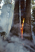 Wildland Fire, Forest Fire, Sequoia and Kings Canyon National Parks, California