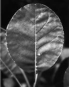 Botany Series.Muttart Conservatory, Edmonton, AB Canada