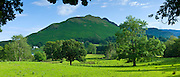 Ash tree in pastureland by Catbells mountain in Cumbrian mountain range at Stair near Derwentwater in Lake District National Park, UK