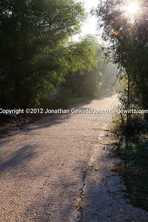 A paved footpath through a scenic grove of olive trees in the Valley of the Cross in Jerusalem. WATERMARKS WILL NOT APPEAR ON PRINTS OR LICENSED IMAGES.