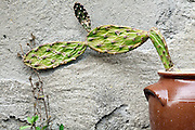 wall with sprouting green and potted cactus plant