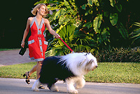 Blonde woman walking sheep dog