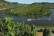 Vineyards, Mosel Valley, Rhineland Palatinate, Germany