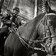 Part of the Mounted Patrol in New York keeping a watch at Times Square