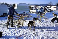 DEU, Germany,  dog sled race in Winterberg, Sauerland, Siberian Huskies, man prepars his sledge.....DEU, Deutschland, Schlittenhunderennen in Winterberg, Sauerland, Sibirischer Huskies, Mann praepariert seinen Schlitten.........