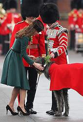 Catherine, Duchess of Cambridge pats Conmeal the regimental mascot after presenting sprigs of shamrock to members of the 1st Battalion Irish Guards during a St Patricks Day Parade at Mons Barracks, Aldershot, Saturday 17th March 2012. .Photo by: Stephen Lock / i-Images