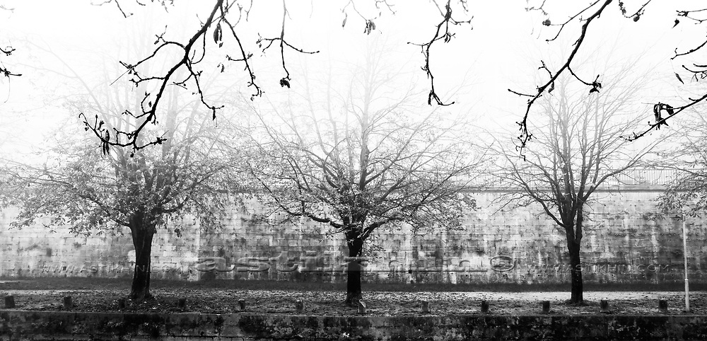 Black and white tree silhouette in fogy day.<br />