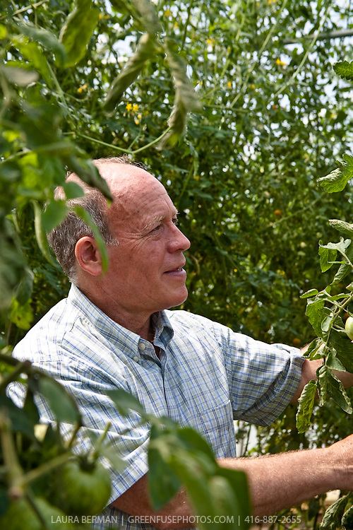 Organic farmer David Cohlmeyer of Cookstown Greens inspects his greenhouse-grown tomatoes for signs of insects.