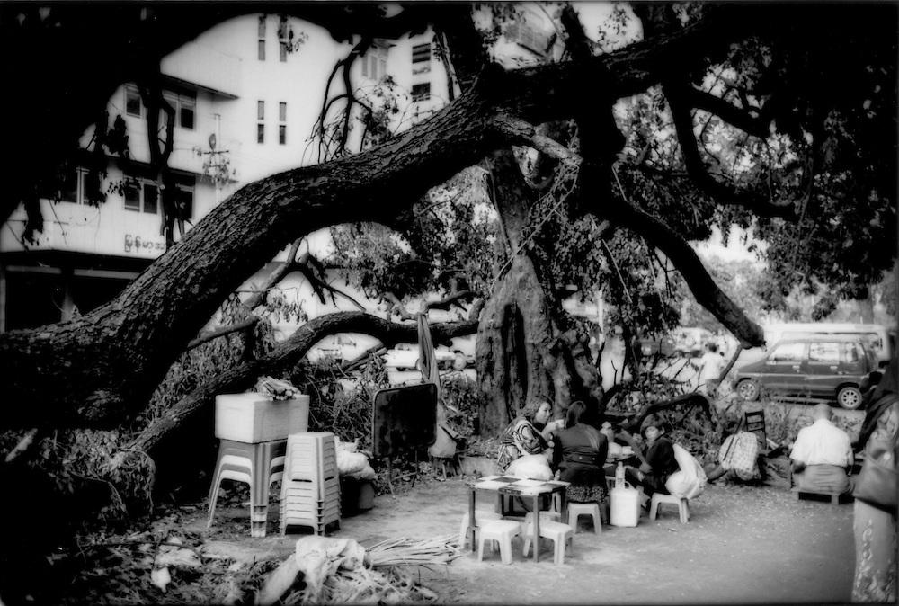 Fallen tree does not prevent sidewalk tea shop from opening for business in central Yangon, Burma (Myanmar).