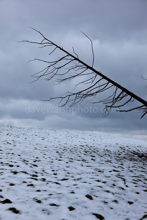 "Fallen Tree and snow covered field. Christmas, Wexford, 2010. This mage can be licensed via Millennium Images. Contact me for more details, or email mail@milim.com For prints, contact me, or click ""add to cart"" to some standard print options."