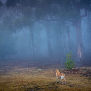 Foggy Morning, Margate, Tasmania
