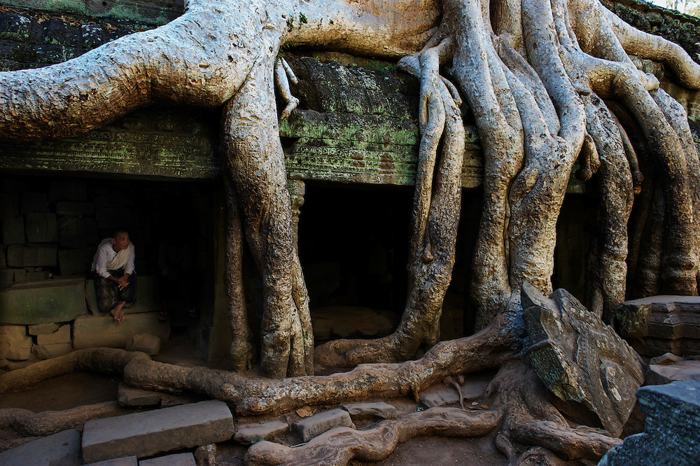 Ta Prohm, now overrun by towering trees from the surrounding forest, was an ancient Buddhist temple and pilgrimage site, still regarded as such by buddhist monks today, even amongst all the tourism, Angkor Wat, Siem Reap, Cambodia