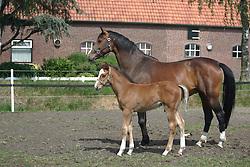 Janssen Piet<br /> Neerkant 2006