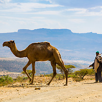 A camel and his owner near Mekelle, Ethiopia