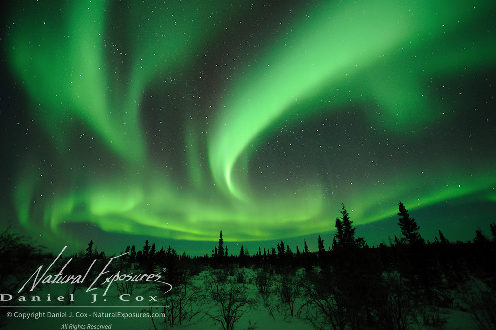Aurora Borealis, also known as Northern Lights, in the sky above Wapusk National Park, Manitoba, Canada.